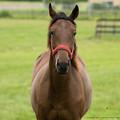 まもなく育成に移る1歳馬「なんだなんだ?」【150720朝野牧場】 #見つめうま