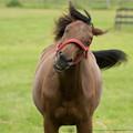 1歳馬ちゃん「おはようございまーす」【150720朝野牧場】