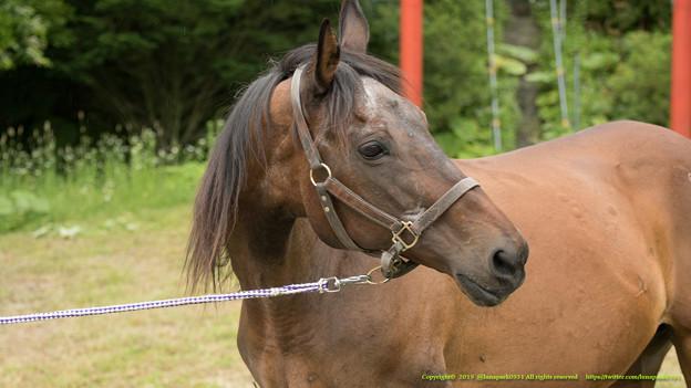 チェリーコウマン「ああ…有馬記念馬がいるんだってね、お隣さん。よく仔っこみたいに鳴いてるわよ」【150720朝野牧場】