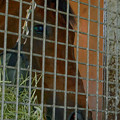 Photos: ロードカナロア「ちゃんと撮ってくれよ~…」【150717社台SS】