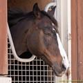 Photos: バランスオブゲーム「うーん、涼しい風が吹いてきてる…」【150717NHP】 #考える馬