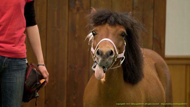 メメちゃん「あげないよ~ベーっだ」【150717NHP】 #ジロリ馬 #ペロリ馬