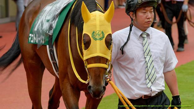 (7)マコトルーメン「きょうも馬場はずぶずぶなんですね…なんなんだろ、ぼくが雨男?」【150830新潟11R新潟2歳S】 #見つめうま