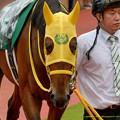 Photos: (7)マコトルーメン「きょうも馬場はずぶずぶなんですね…なんなんだろ、ぼくが雨男?」【150830新潟11R新潟2歳S】 #見つめうま