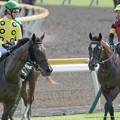 ティリアンパープル「そうか勝ったのか~」エーシンホワイティ「牝馬とはいえ58背負ってるんだからすごいねおめでとさん」クリノテンペスタ「ニンジンニンジーン」【150829新潟8R新潟JS】