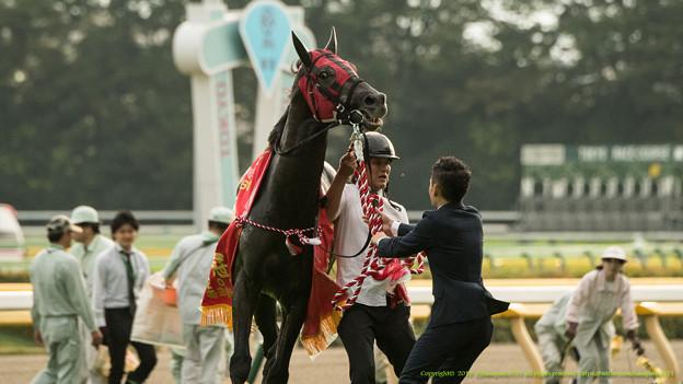 Photos: エイシンヒカリ「帰ろうよ!ねえ帰らせてよ!」【151011東京11R毎日王冠】 #ジロリ馬 #keiba