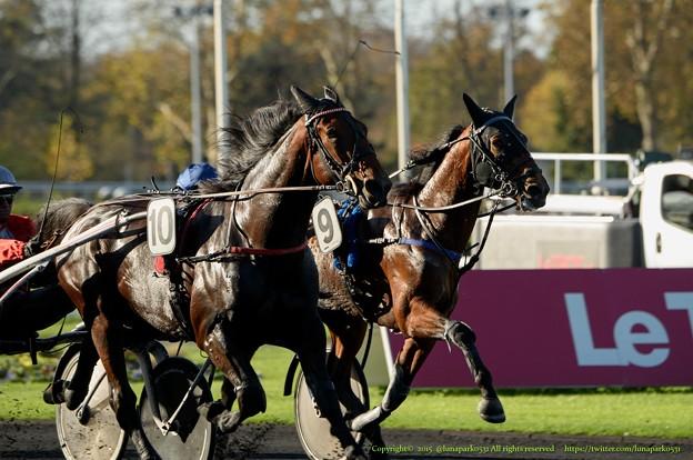 100m、Cristal Moneyが先頭に出る[151109ヴァンセンヌC3'Prix Abel Bassigny'(GII)]