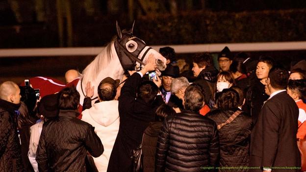 Photos: ゴールドシップ「すげえペタペタし放題じゃねえか~」【151227中山ゴールドシップ引退式】 #ジロリ馬