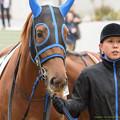 Photos: (10)ナバホトウショウ「牧場のことを考えると、頑張らなきゃあね~…」【160123中山4R】