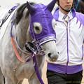 Photos: シフォンカール「前は同厩舎、私とカムちゃんは同級生、複雑なのよいろいろ」【160123中山4R】