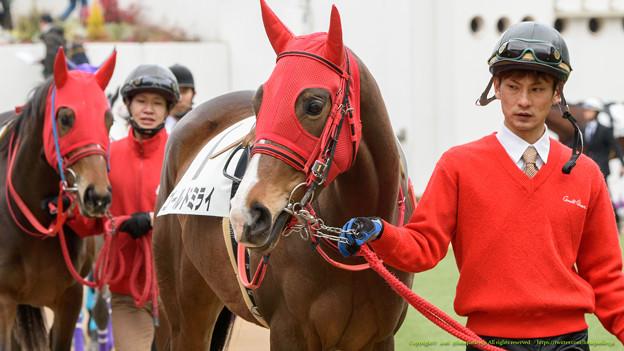 (1)ゴールドミライ「ミサちゃんと隣なので安心しちゃいます」【160123中山4R新馬】