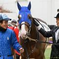 Photos: アドリア「うーん、なんだかすごくなだめられている気がするわ」【160123中山4R新馬】