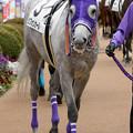 Photos: シフォンカール「ヘンな目でみないでちょうだいよ」【160123中山4R新馬】
