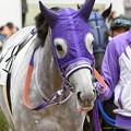 Photos: (3)シフォンカール「なんだかめんどくさそうな人がいるわね」←すいません【160123中山4R新馬】