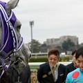 Photos: シフォンカール「大野さんよく頑張りましたね。褒めますよ」【160123中山4R】