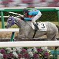 Photos: シフォンカール、終わってみたら後続を4馬身ちぎっての新馬戦勝利!【160123中山4R】