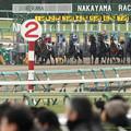 Photos: シフォンカール、無難なスタート。【160123中山4R】