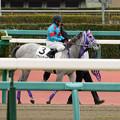 Photos: シフォンカール「いよいよレースなのね~」【160123中山4R】
