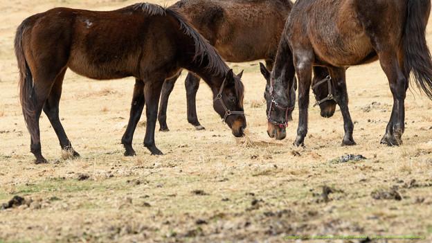 キャロル(左)「お?なんだなんだ?」ダンシングアリーナ「気にしないよ」【160215ホーストラスト放牧地A】 #ジロリ馬