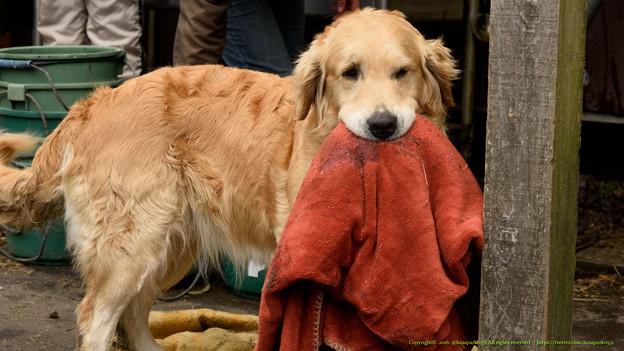 キャリー「毛布がね、友達」【160215ホーストラスト】