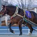 厩務員さん、安部騎手そして観客の声援を受けてゴールを目指すフクドリ【160320帯広9Rばんえい記念】 #banei #ばんえい記念
