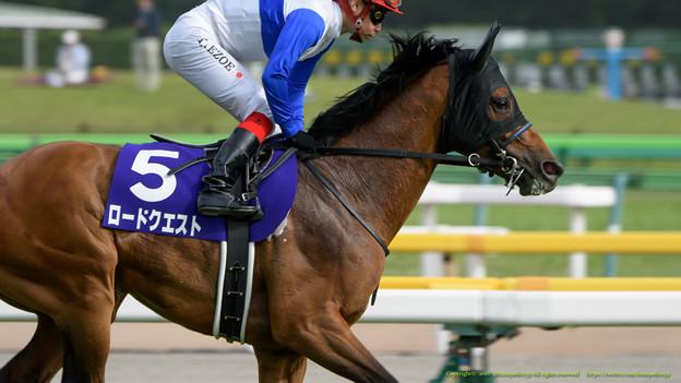 ロードクエスト(池添)「急に後ろからいける馬場になったって言ってたけどホントかなぁ…」【160508東京11RNHKマイルC】
