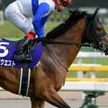 Photos: ロードクエスト(池添)「急に後ろからいける馬場になったって言ってたけどホントかなぁ…」【160508東京11RNHKマイルC】