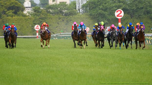 100m、外からロードクエストやダンツプリウスなどが猛追【160508東京11RNHKマイルC】
