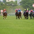 Photos: 100m、外からロードクエストやダンツプリウスなどが猛追【160508東京11RNHKマイルC】
