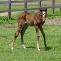 4月産まれの仔っ子「にんげんたくさんくるなきょうは」【160515五丸農場】