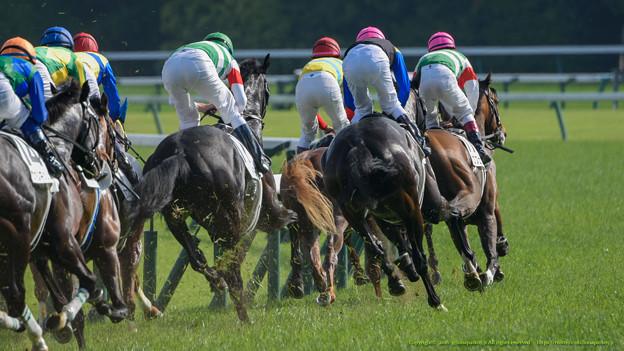 写真: 1角。世代最強馬決定まであと120秒【160529東京10R東京優駿(日本ダービー)】