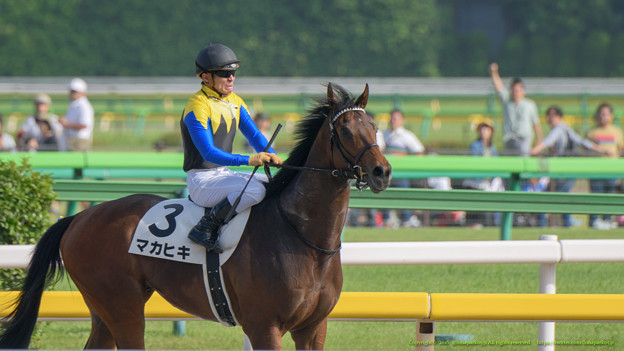 写真判定が出た瞬間。マカヒキ「ほらね。勝ってたでしょ」【160529東京10R東京優駿(日本ダービー)】