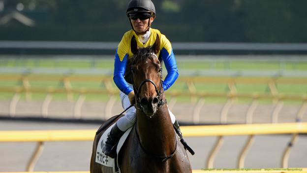 マカヒキ「それでは改めまして。ダービー馬が通りますよ」【160529東京10R東京優駿(日本ダービー)】 #見つめうま