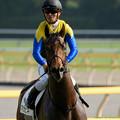 写真: マカヒキ「それでは改めまして。ダービー馬が通りますよ」【160529東京10R東京優駿(日本ダービー)】 #見つめうま