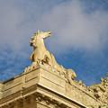 Photos: 青空に雄たけびを上げる白い馬。セイウンスカイ?(違)[151106Les Grandes Ecuries]