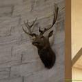 Photos: 鹿さんなんかも監視中。[151106Les Grandes Ecuries]