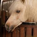 Photos: お馬さん「いつもは三つ編みにしてるからこんなウェービーよ」[151106Les Grandes Ecuries]
