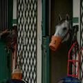 写真: 右のお馬さん「おねえさんこっちにも構ってほしいんですけど」[161001シャンティイ] #Chantilly