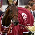 写真: DohaDream「ギリギリ危なかった…なんてことはないんすよ」[161001シャンティイC1_QatarPrixChaudenay(GII)] #Chantilly #見つめうま