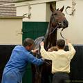 写真: 洗い場に入ってるお馬さん「そこそこ、そこが気持ちがいいんっすよ」[161001シャンティイ] #Chantilly