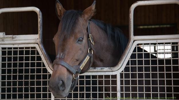 ロジユニヴァース「ここにいる唯一のダービー馬なんだけどね~」[171014優駿SS]