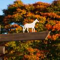 Photos: アロースタッドの秋。[171014アロースタッド]