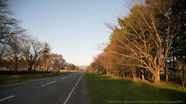 10月中旬のアロー閉館時の二十間道路。11月になるとかなり暗くなります。半年後は桜がすごいんでしょうね[171014アロースタッド]