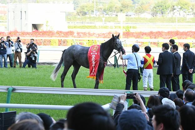 キンショーユキヒメ「こんなに撮られるの苦手です」<180421福島11R福島牝馬S>