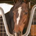 Photos: ワンアンドオンリー「だってみんなのダービー馬ですから(キリッ!」[181110アローS]