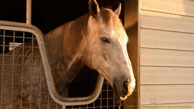 ラニ「うとうとするダービー馬ってのもカッコいいよね…zzz」[181110アローS]