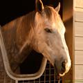 Photos: ラニ「うとうとするダービー馬ってのもカッコいいよね…zzz」[181110アローS]