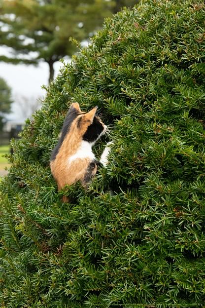 ニャンさん「木登りもできるんすよ」[191019アロースタッド]