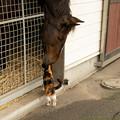 Photos: ニャンさん「ワンさんのおうちはきれいにしてるね」ワンアンドオンリー「ダービー馬としての品格っすよ」[191019アロースタッド]