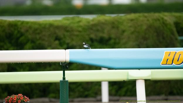 鳥さん「せっかくだからお馬さんでもみてみようかと」[190615函館11R #函館SS]
